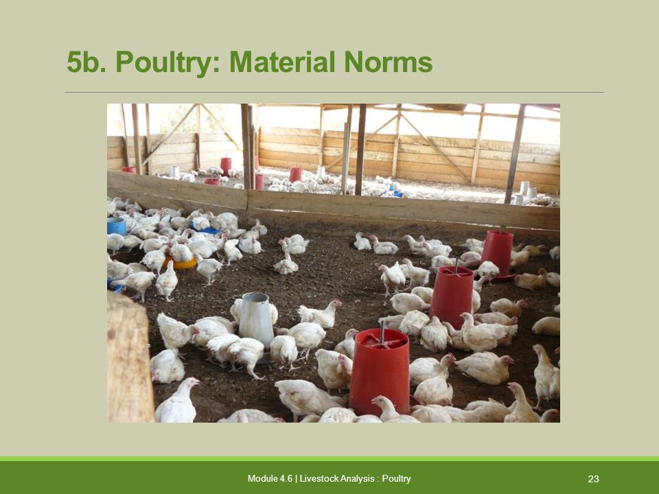 5b. Poultry: Material Norms