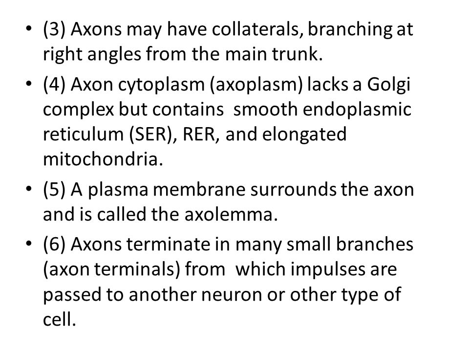 (3) Axons may have collaterals, branching at right angles from the main trunk.