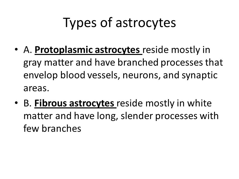 Types of astrocytes