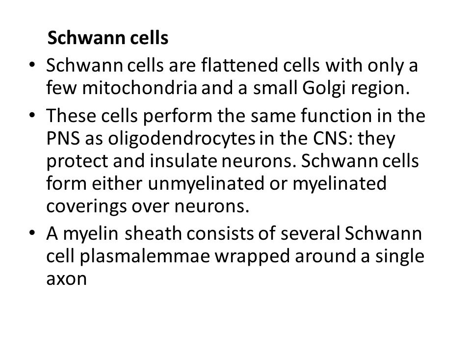 Schwann cells Schwann cells are flattened cells with only a few mitochondria and a small Golgi region.