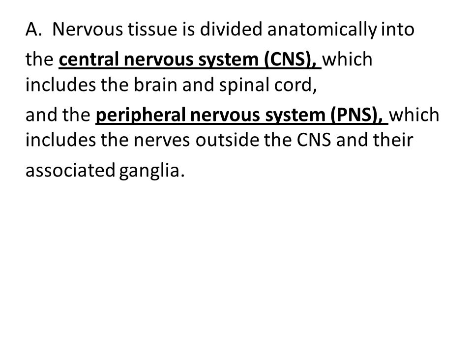 Nervous tissue is divided anatomically into