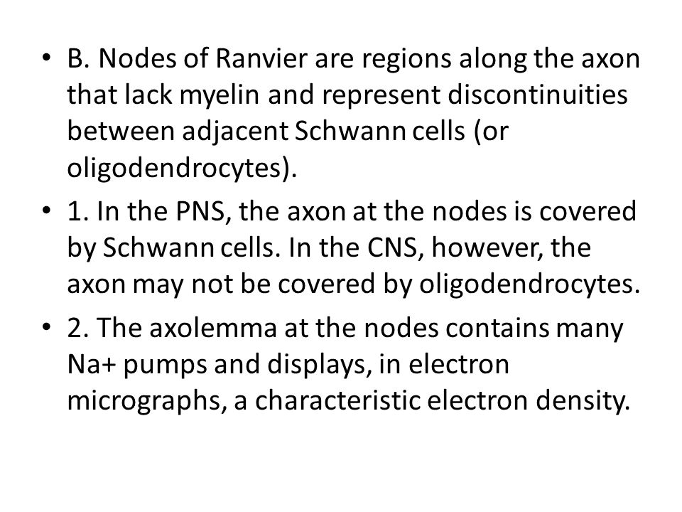 B. Nodes of Ranvier are regions along the axon that lack myelin and represent discontinuities between adjacent Schwann cells (or oligodendrocytes).