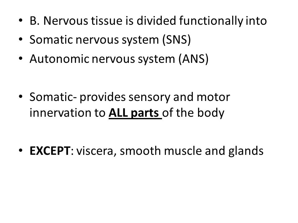 B. Nervous tissue is divided functionally into