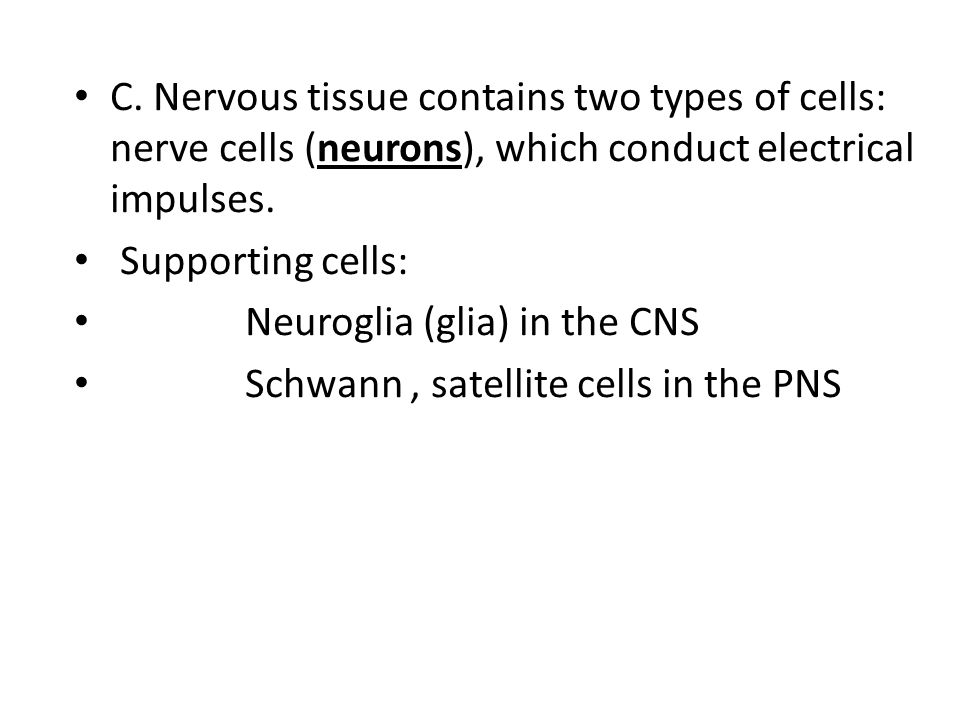 C. Nervous tissue contains two types of cells: nerve cells (neurons), which conduct electrical impulses.