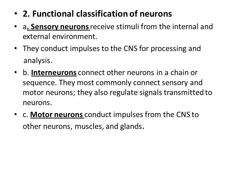 2. Functional classification of neurons