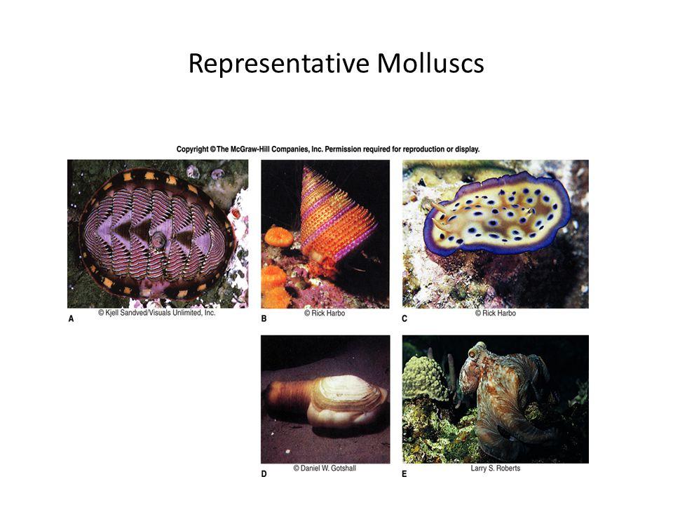Representative Molluscs