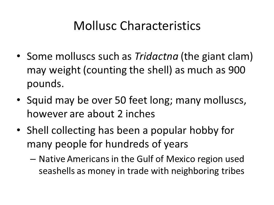 Mollusc Characteristics