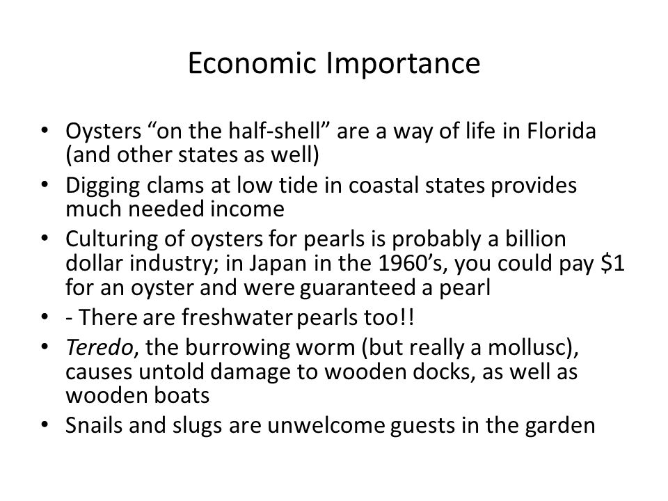 Economic Importance Oysters on the half-shell are a way of life in Florida (and other states as well)