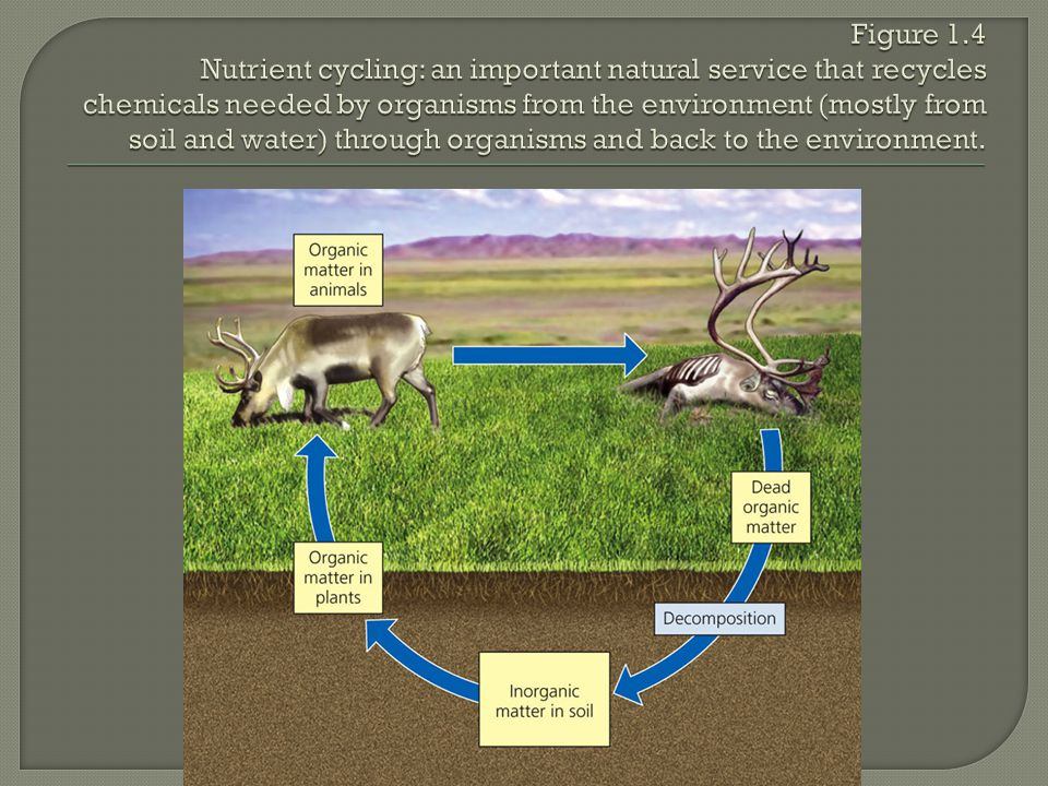 Figure 1.4 Nutrient cycling: an important natural service that recycles chemicals needed by organisms from the environment (mostly from soil and water) through organisms and back to the environment.