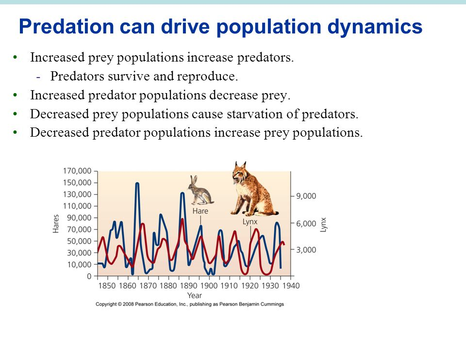 Predation can drive population dynamics
