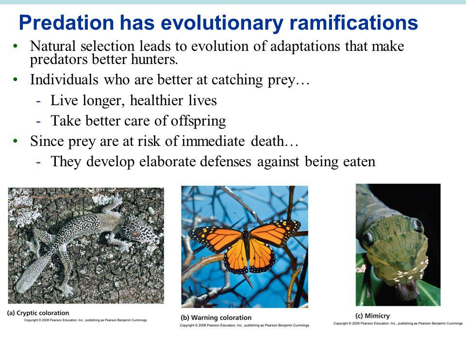 Predation has evolutionary ramifications