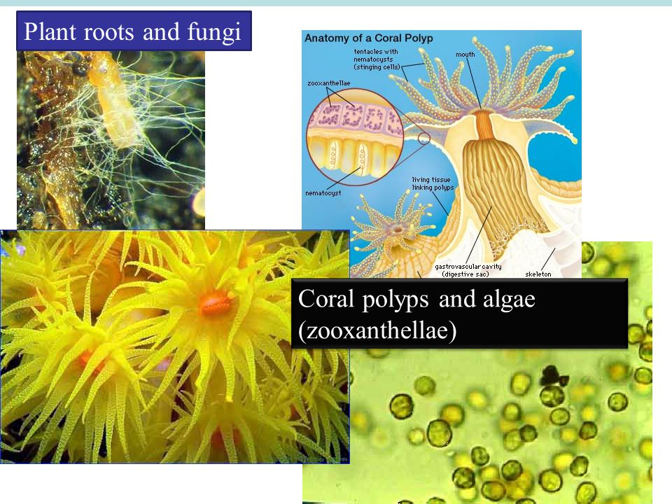coral polyp and zooxanthellae relationship problems