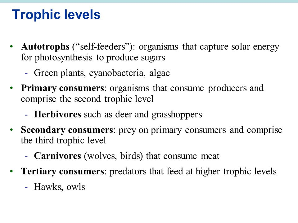Trophic levels Autotrophs ( self-feeders ): organisms that capture solar energy for photosynthesis to produce sugars.