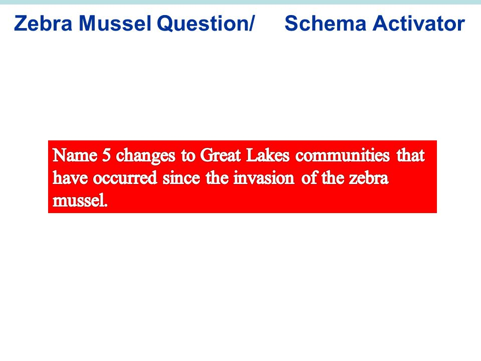 Zebra Mussel Question/ Schema Activator