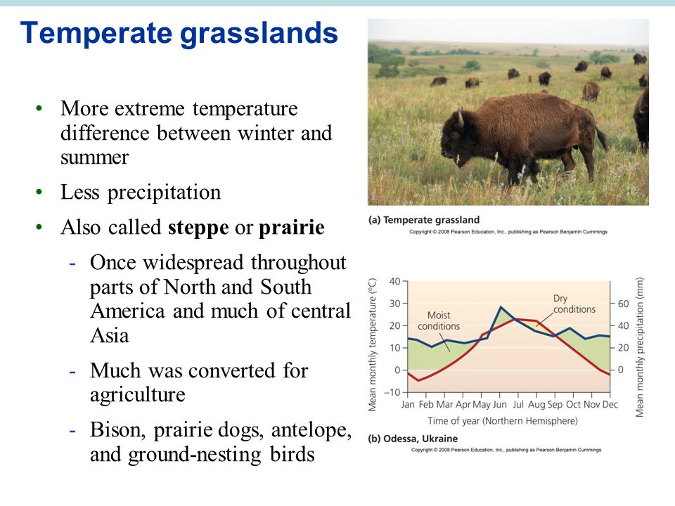 Temperate grasslands More extreme temperature difference between winter and summer. Less precipitation.