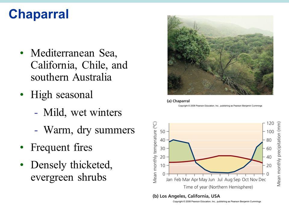 Chaparral Mediterranean Sea, California, Chile, and southern Australia