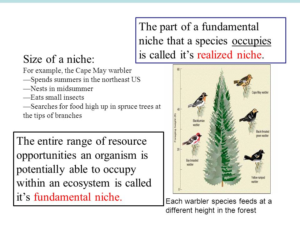 The part of a fundamental niche that a species occupies is called it's realized niche.