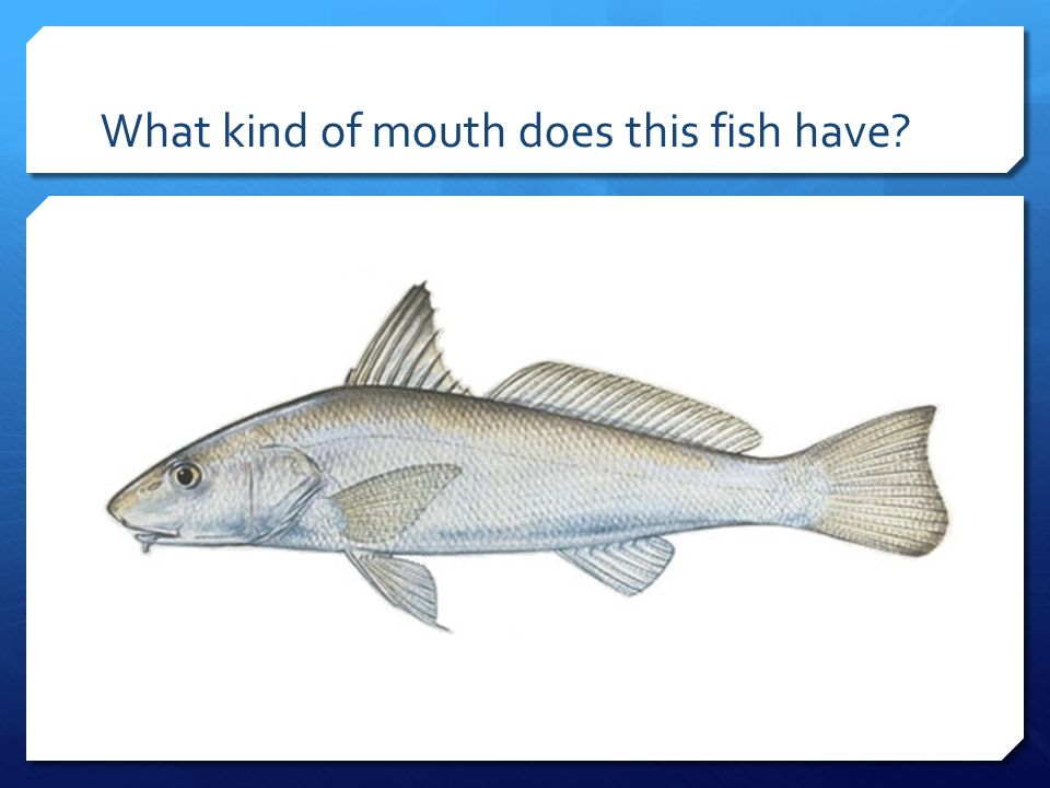 What kind of mouth does this fish have