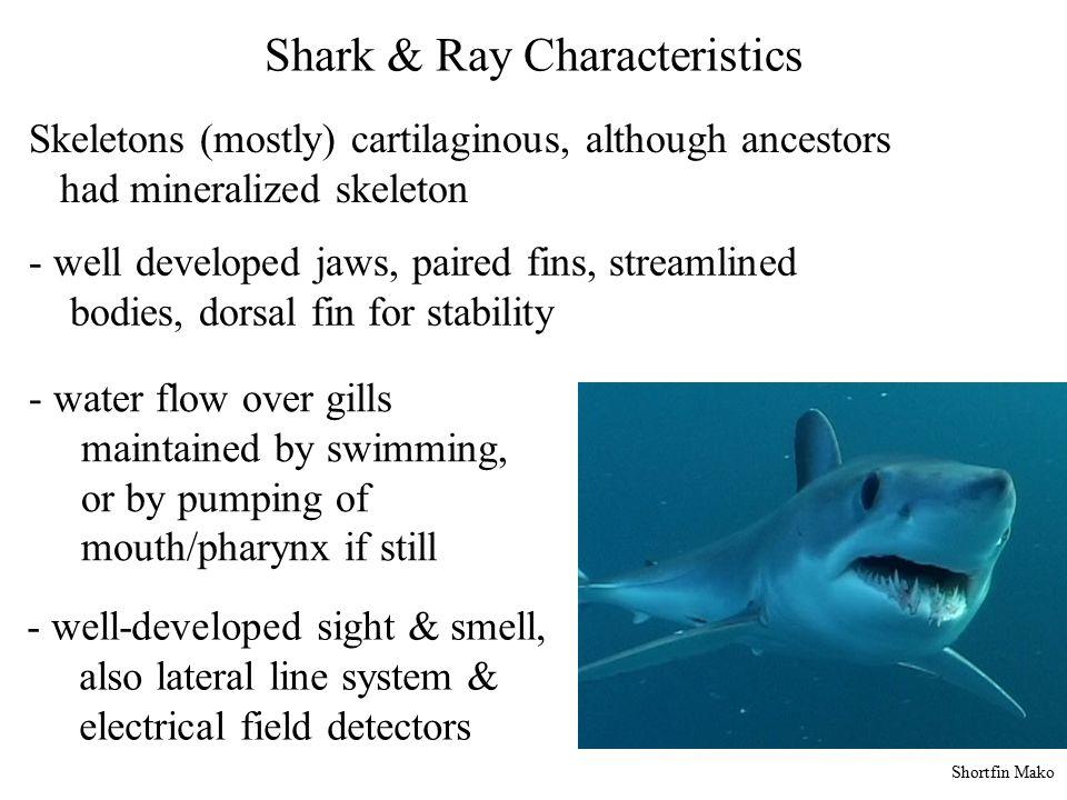 Shark & Ray Characteristics