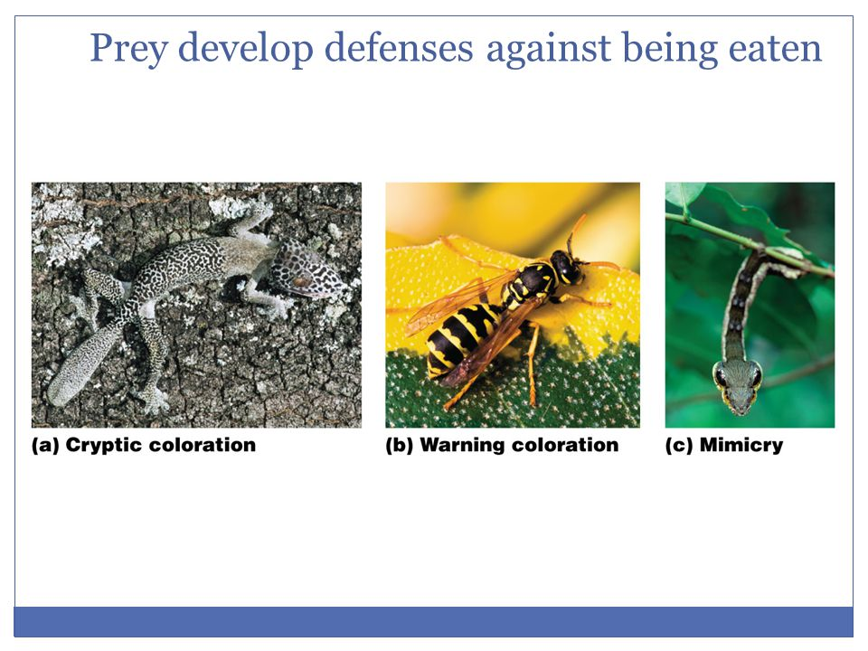 Prey develop defenses against being eaten