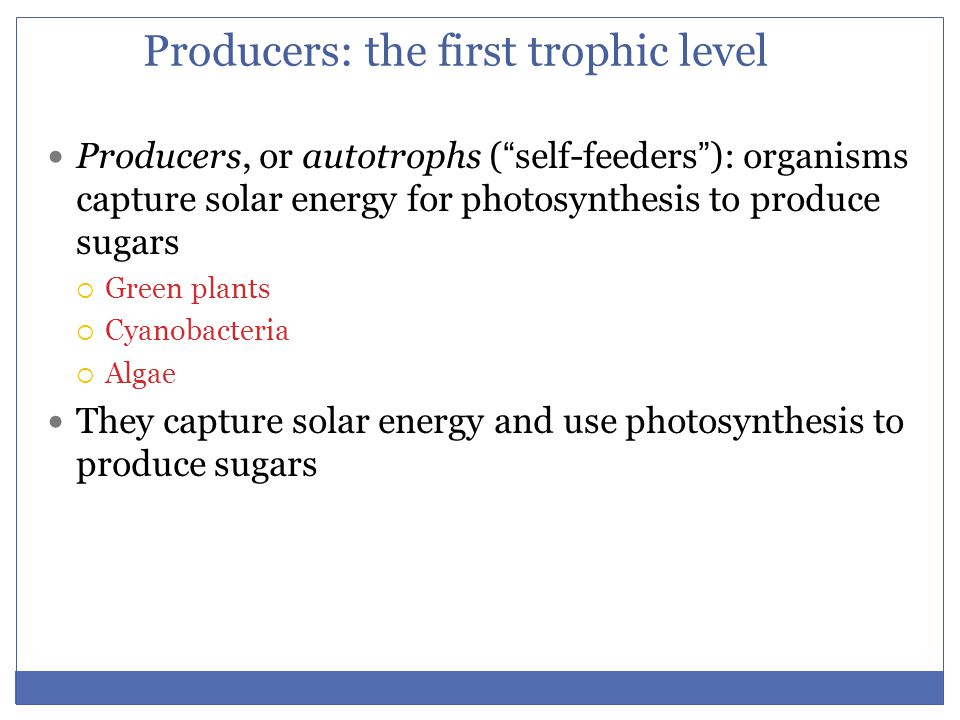 Producers: the first trophic level