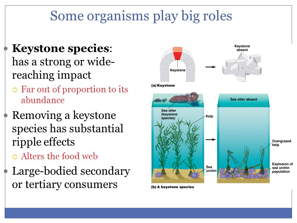 Some organisms play big roles