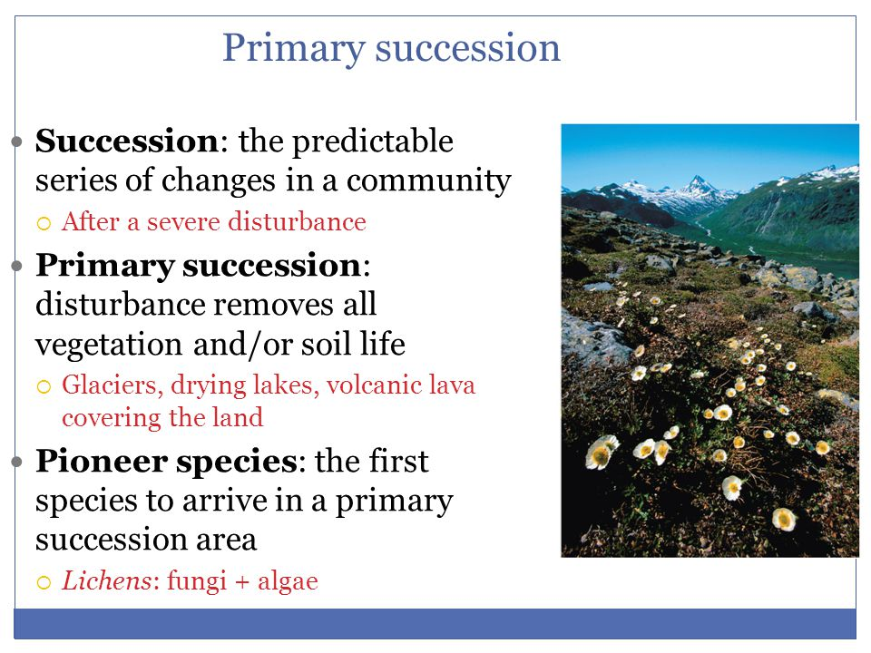 Primary succession Succession: the predictable series of changes in a community. After a severe disturbance.