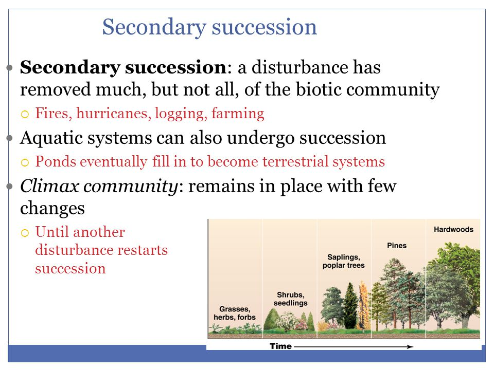 Secondary succession Secondary succession: a disturbance has removed much, but not all, of the biotic community.