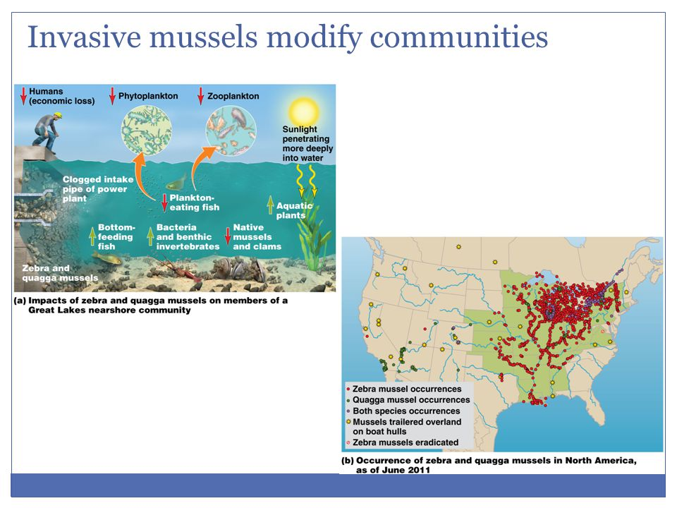 Invasive mussels modify communities