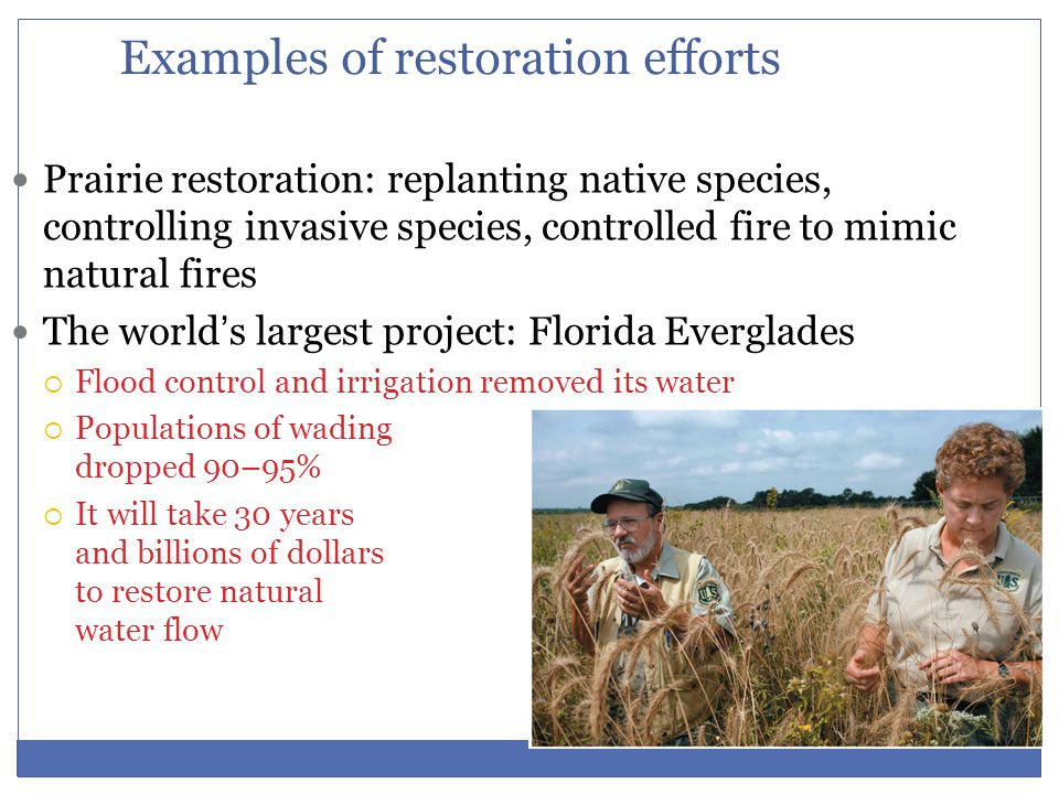 Examples of restoration efforts