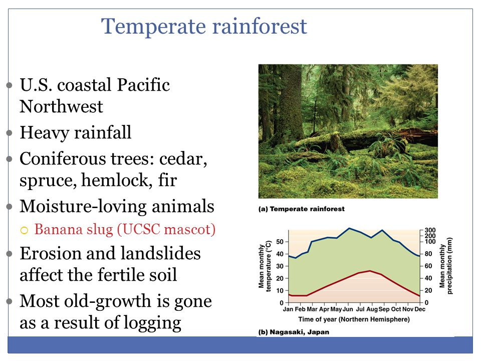 Temperate rainforest U.S. coastal Pacific Northwest Heavy rainfall
