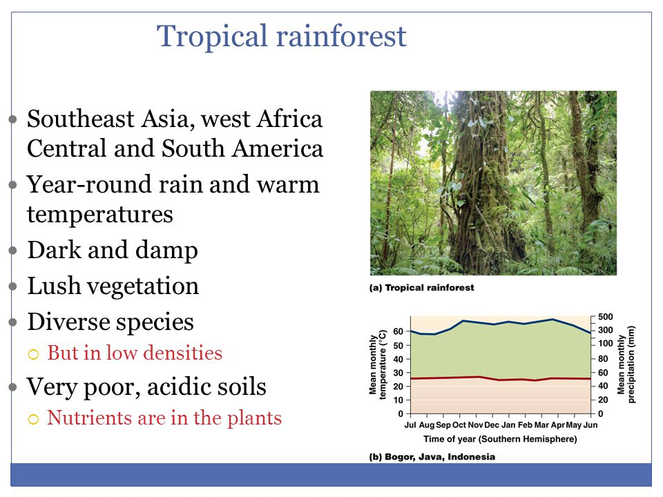 Tropical rainforest Southeast Asia, west Africa Central and South America. Year-round rain and warm temperatures.