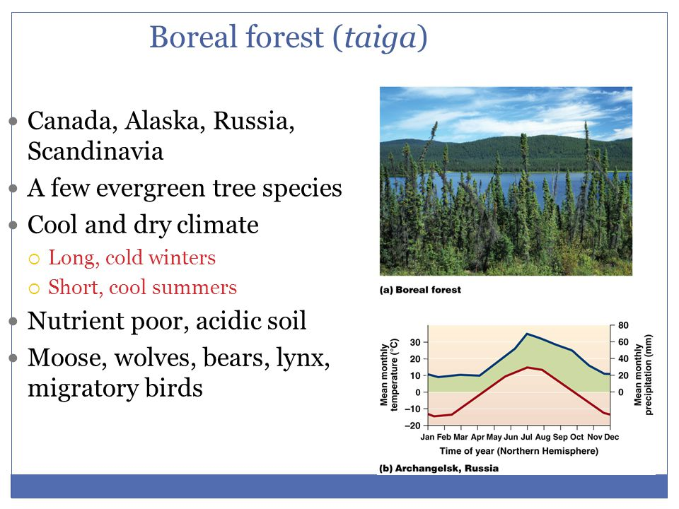 Boreal forest (taiga) Canada, Alaska, Russia, Scandinavia