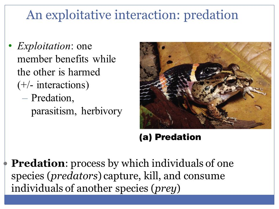An exploitative interaction: predation
