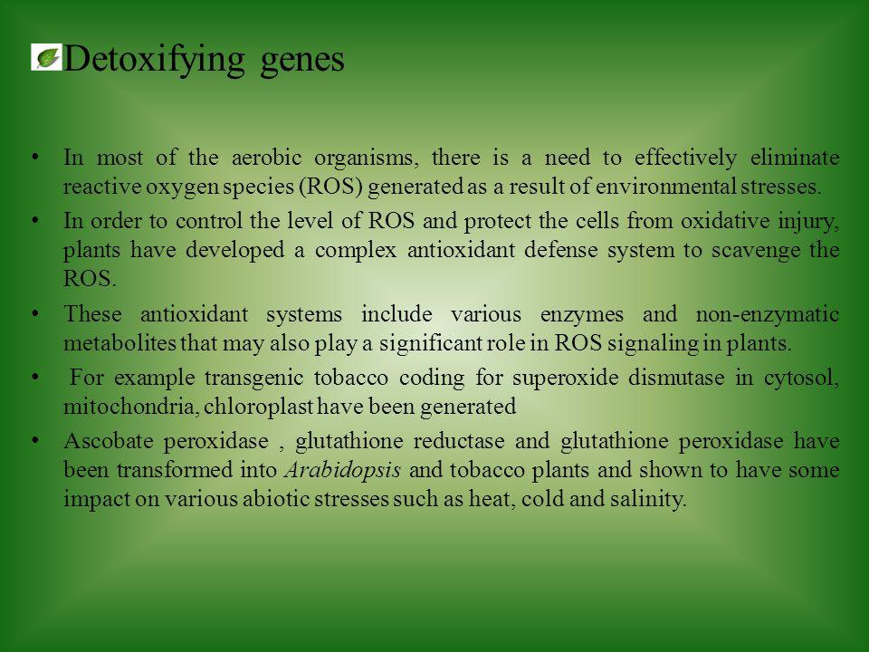 Detoxifying genes
