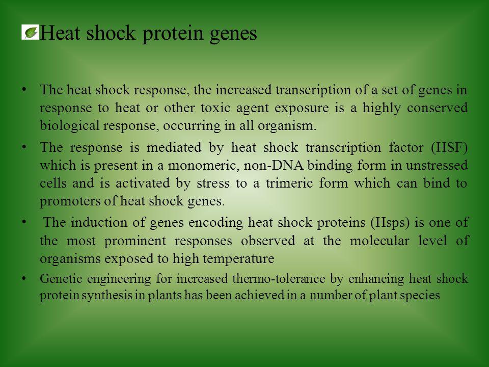 Heat shock protein genes