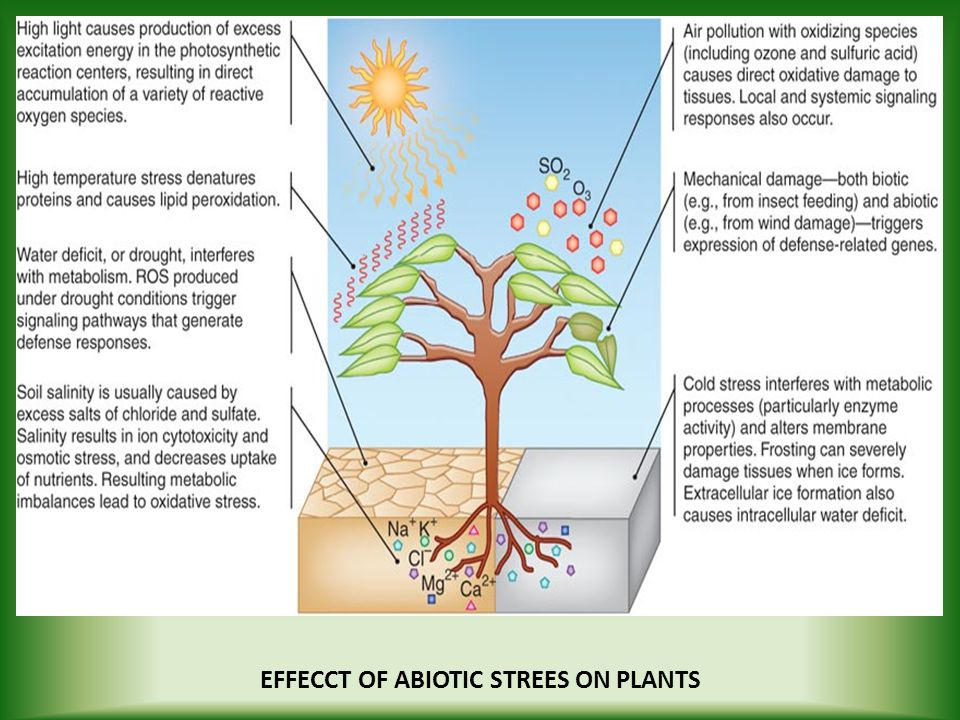 EFFECCT OF ABIOTIC STREES ON PLANTS