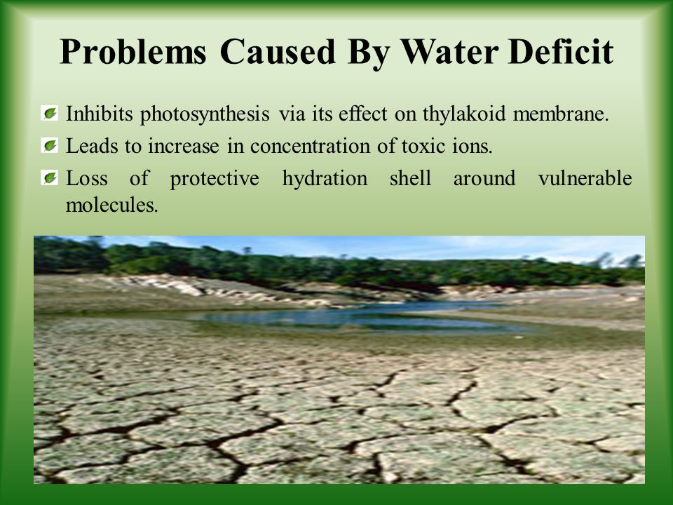 Problems Caused By Water Deficit