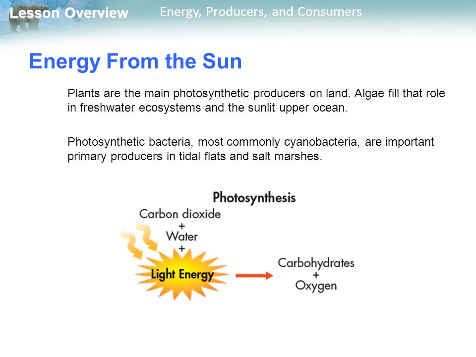 Energy From the Sun Plants are the main photosynthetic producers on land. Algae fill that role in freshwater ecosystems and the sunlit upper ocean.
