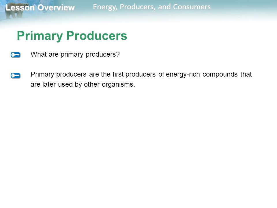 Primary Producers What are primary producers