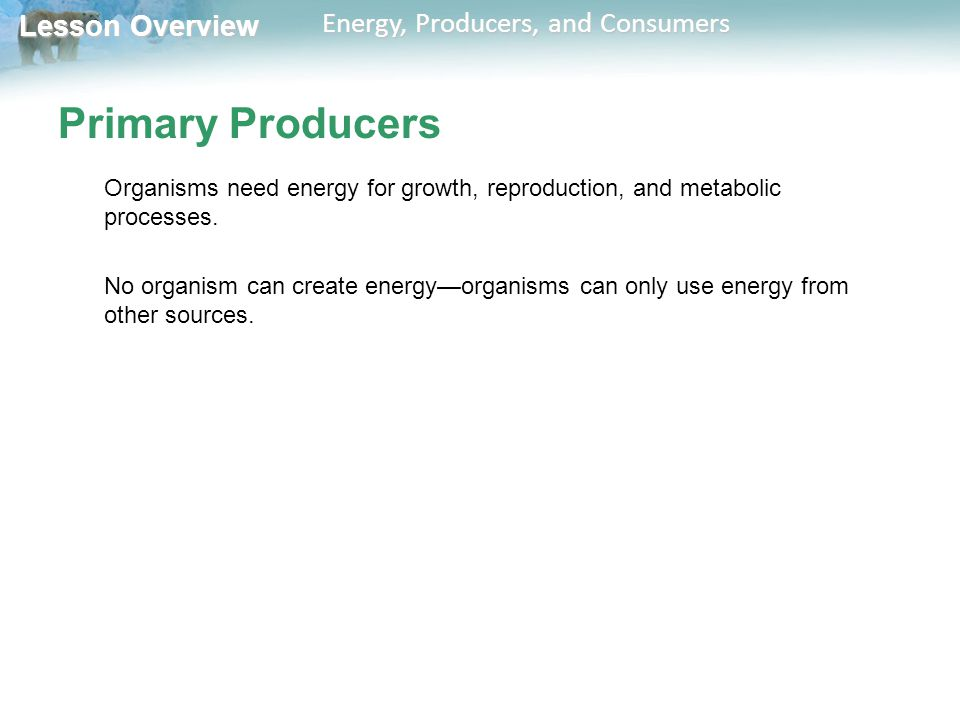 Primary Producers Organisms need energy for growth, reproduction, and metabolic processes.