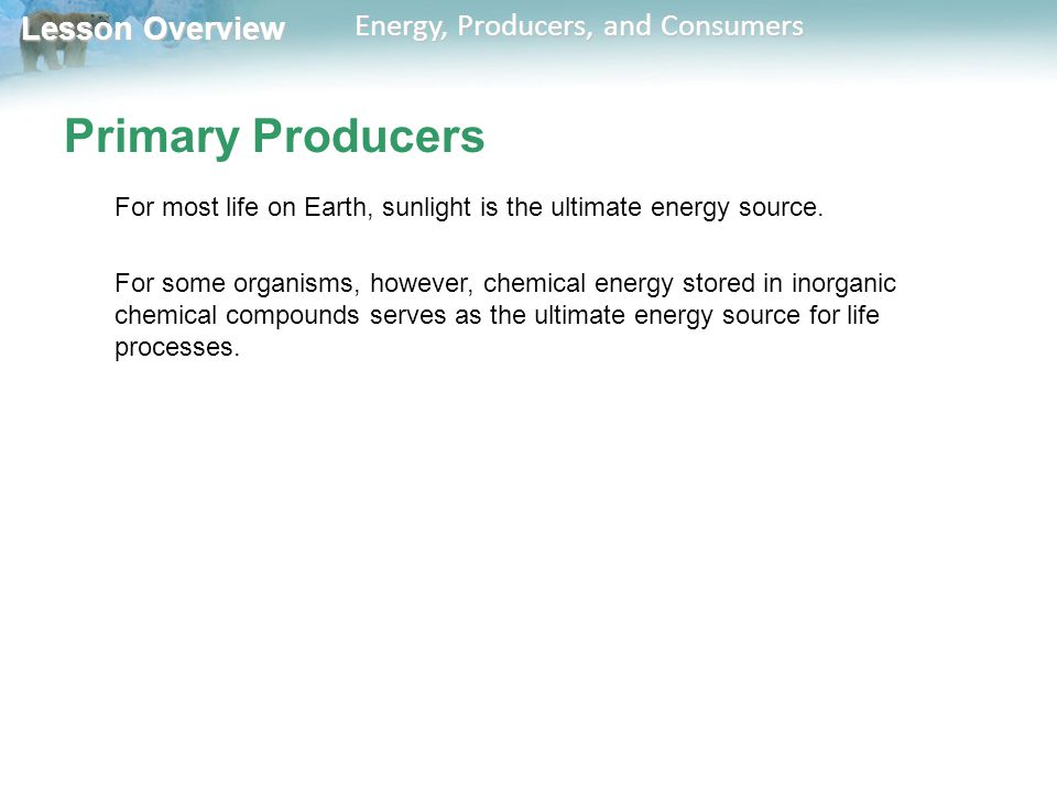 Primary Producers For most life on Earth, sunlight is the ultimate energy source.