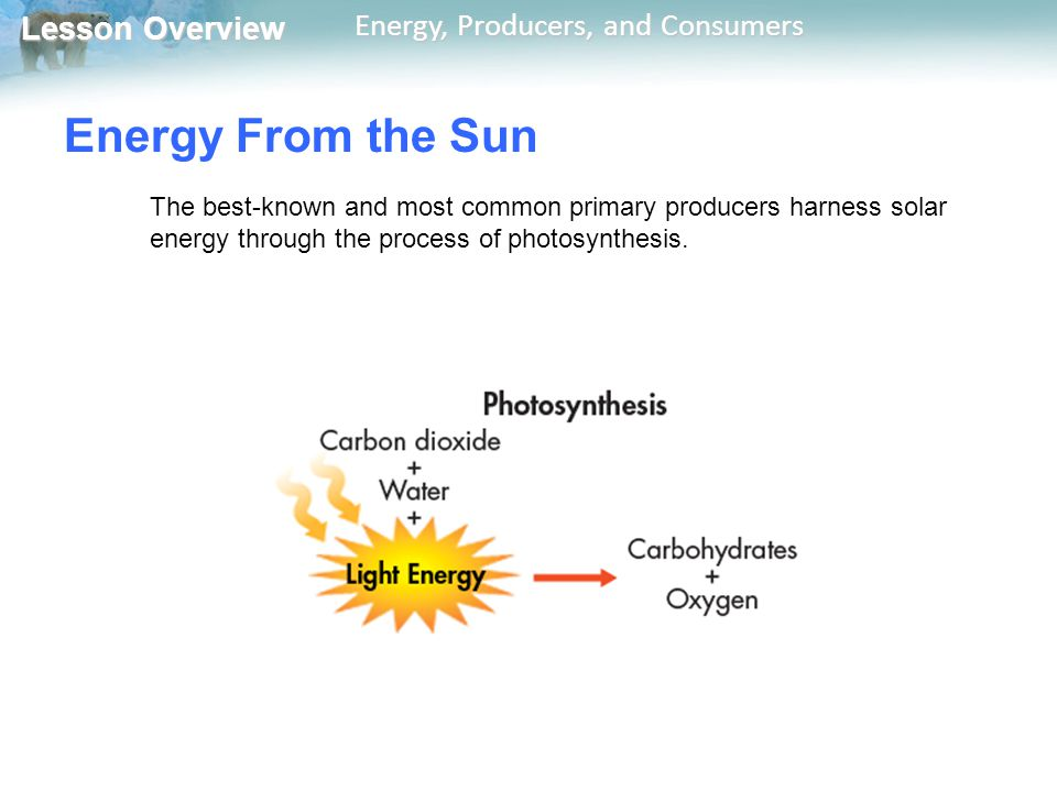 Energy From the Sun The best-known and most common primary producers harness solar energy through the process of photosynthesis.