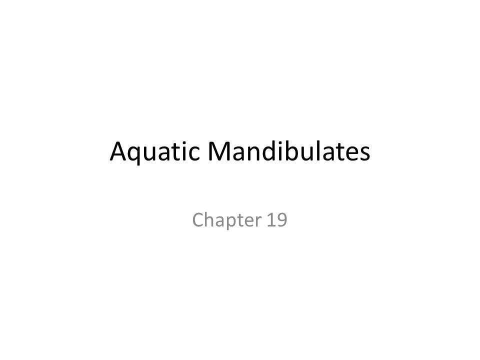 Aquatic Mandibulates Chapter 19