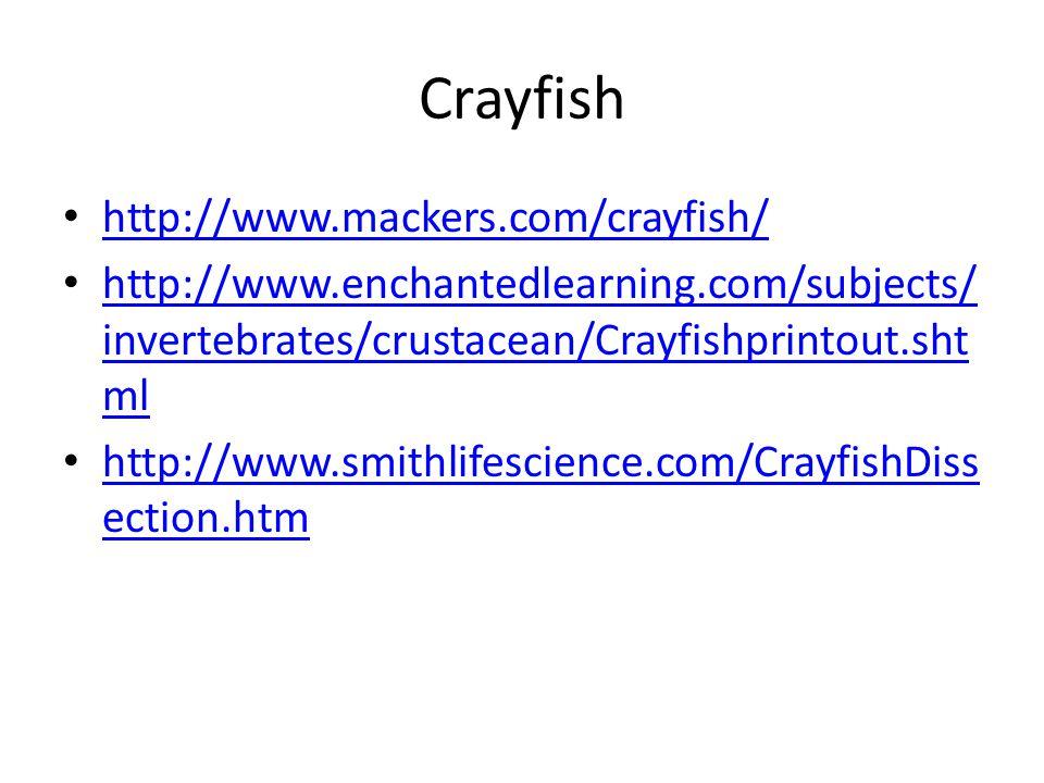 Crayfish http://www.mackers.com/crayfish/