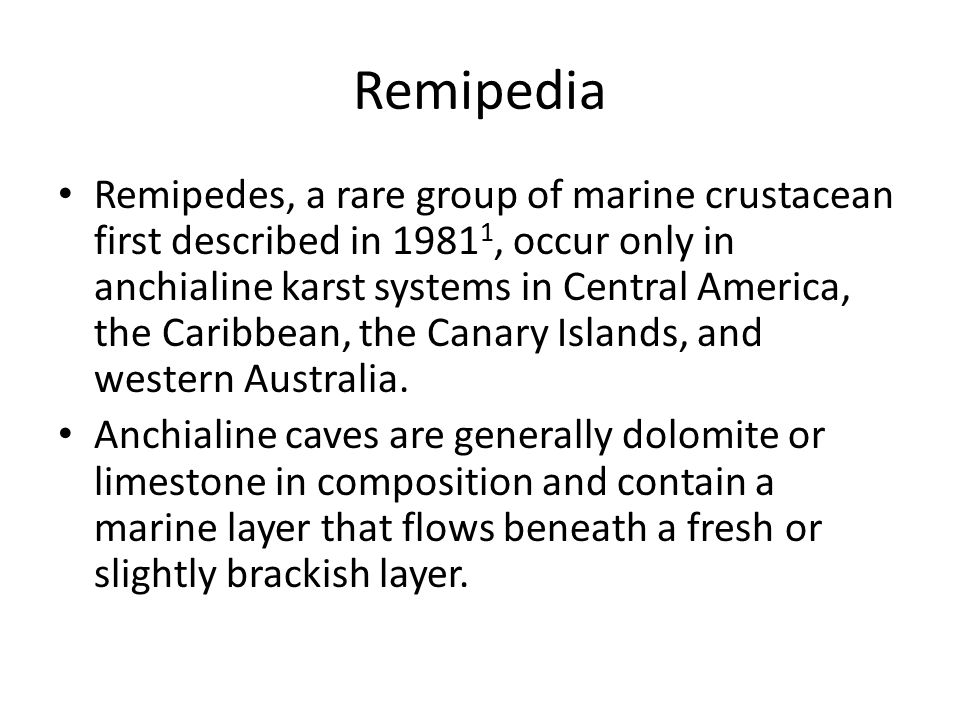 Remipedia