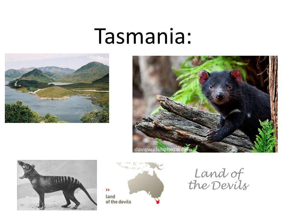 Tasmania: Land of the Devils
