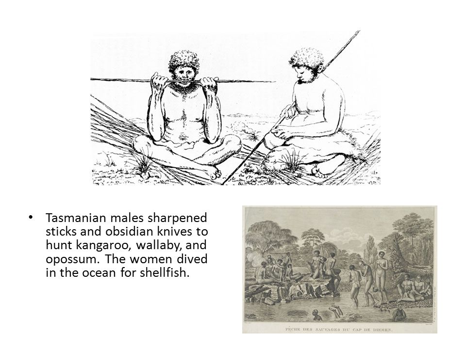 Tasmanian males sharpened sticks and obsidian knives to hunt kangaroo, wallaby, and opossum.