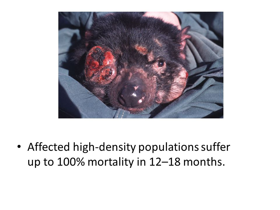 Affected high-density populations suffer up to 100% mortality in 12–18 months.