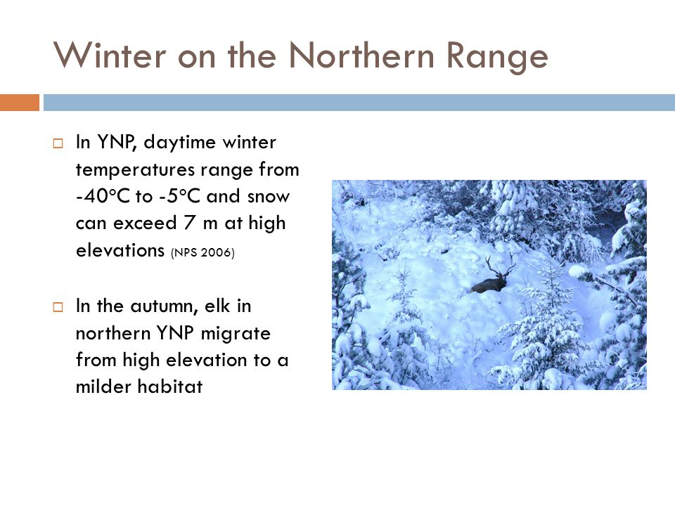 Winter on the Northern Range